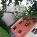 Umgekippter Baum lehnt am Haus